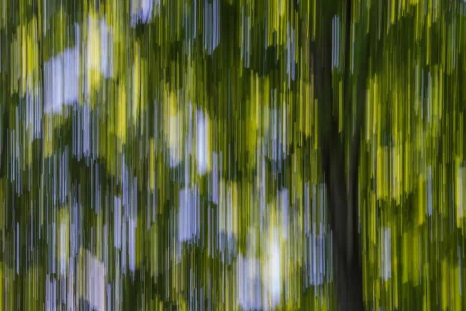 07052014 Schoepfle Garden-104