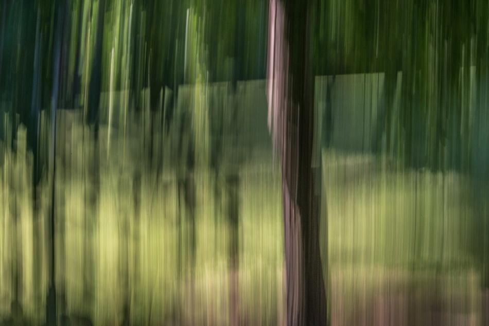 07052014 Schoepfle Garden-138