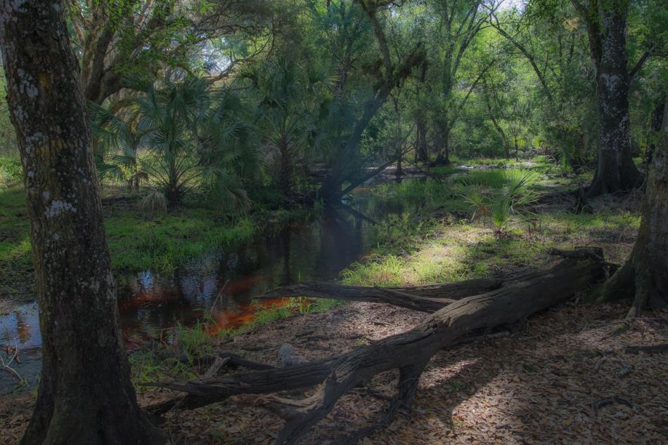 02082015 Myakka River State Park-36