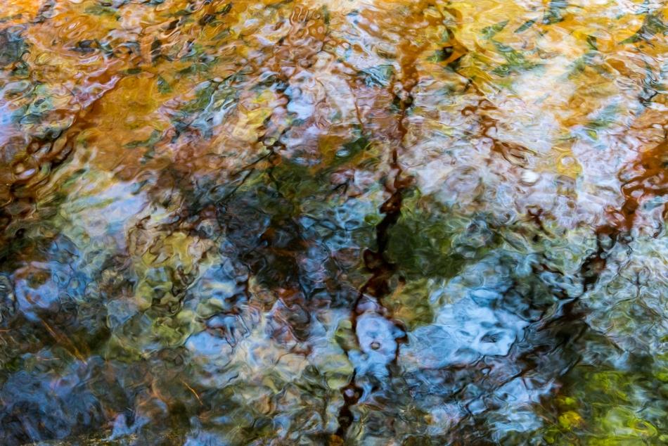 12202015 Myakka River State Park-111