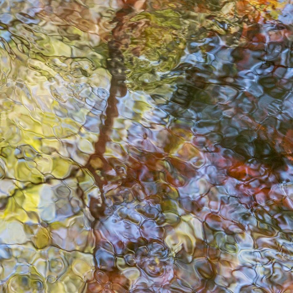 12202015 Myakka River State Park-133