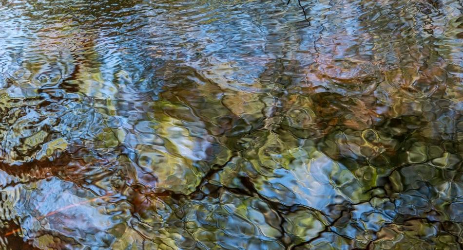 12202015 Myakka River State Park-141