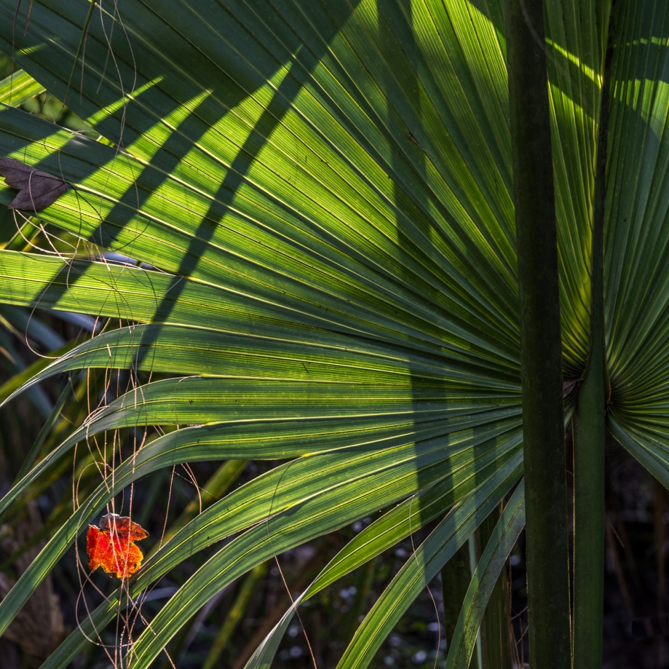 12202015 Myakka River State Park-36-Edit