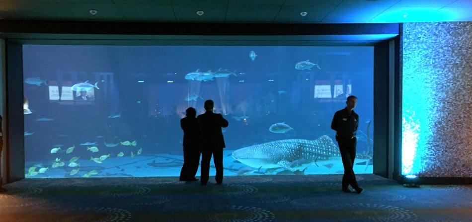 Georgia Aquarium 1 copy