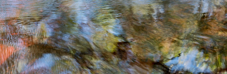 12202015 Myakka River State Park-140
