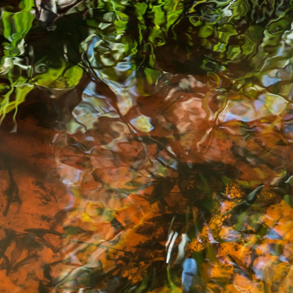 12202015 Myakka River State Park-151