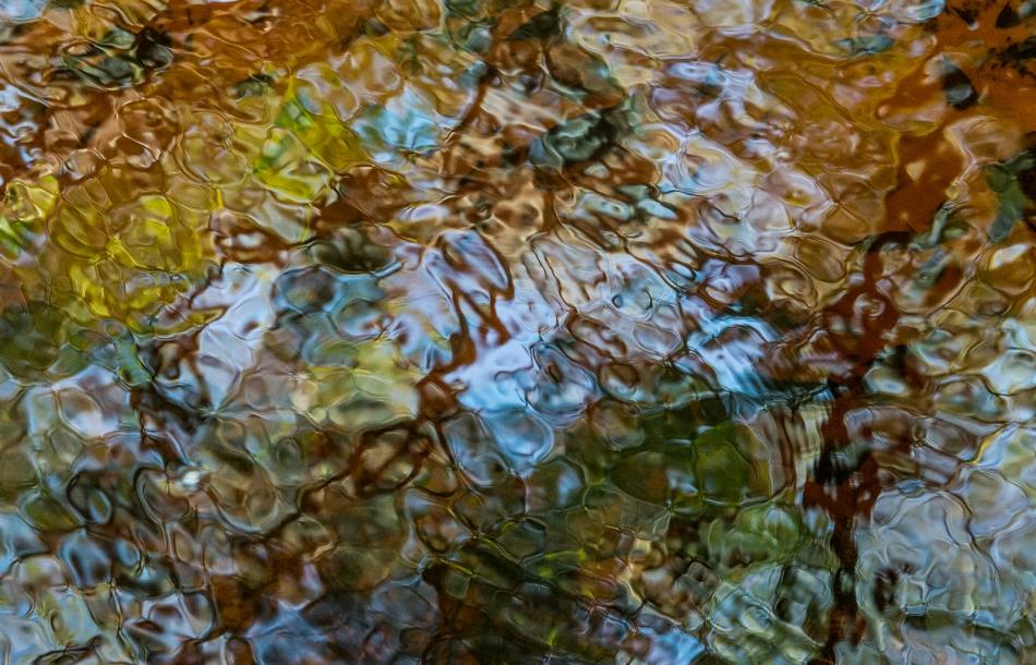 12202015 Myakka River State Park-155