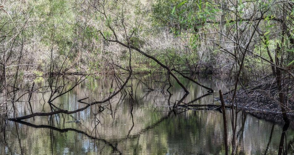 12272015 Venice Myakka River Park-58