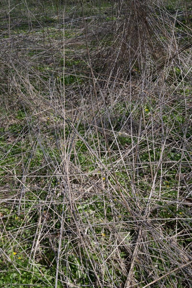 04172016 Schoepfle Garden-135