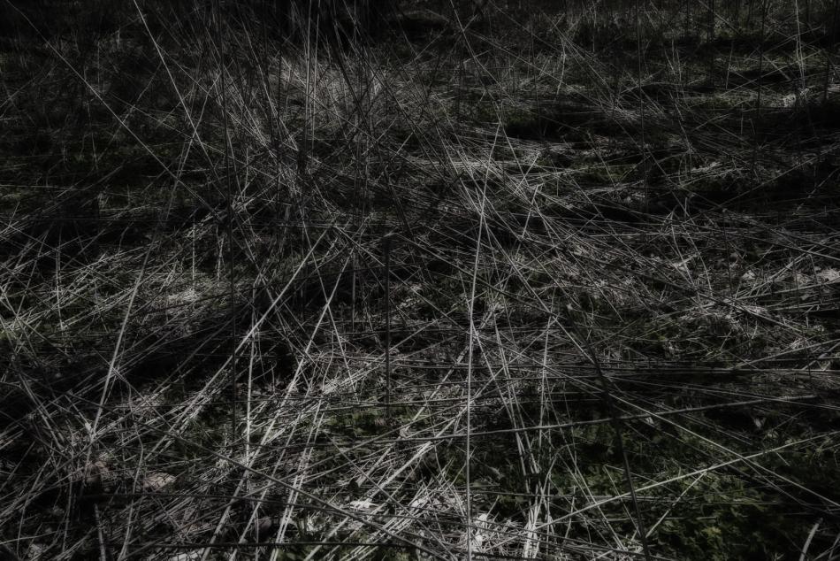 04172016 Schoepfle Garden-136-Edit
