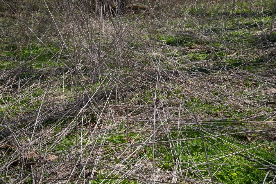 04172016 Schoepfle Garden-136