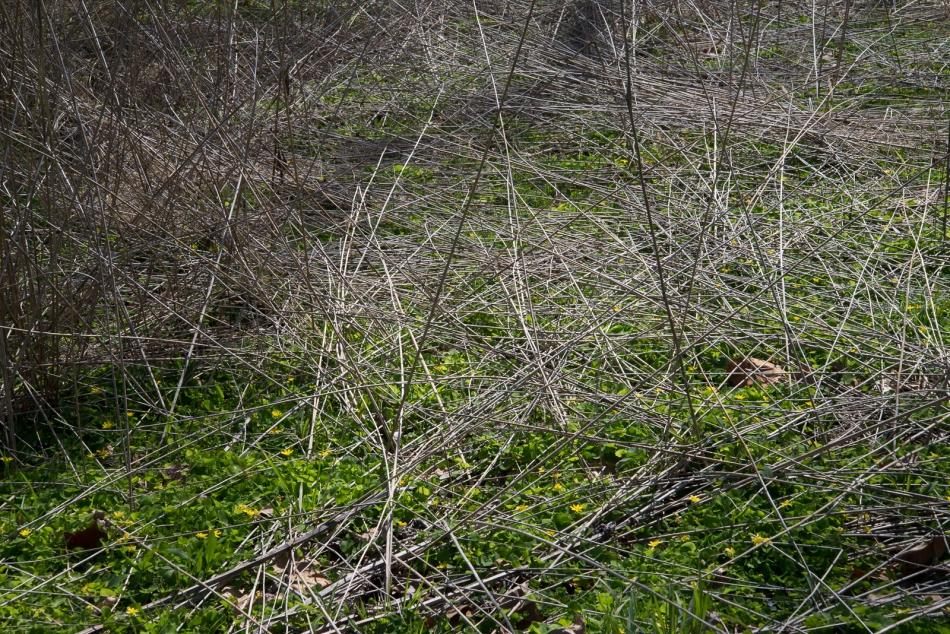 04172016 Schoepfle Garden-137
