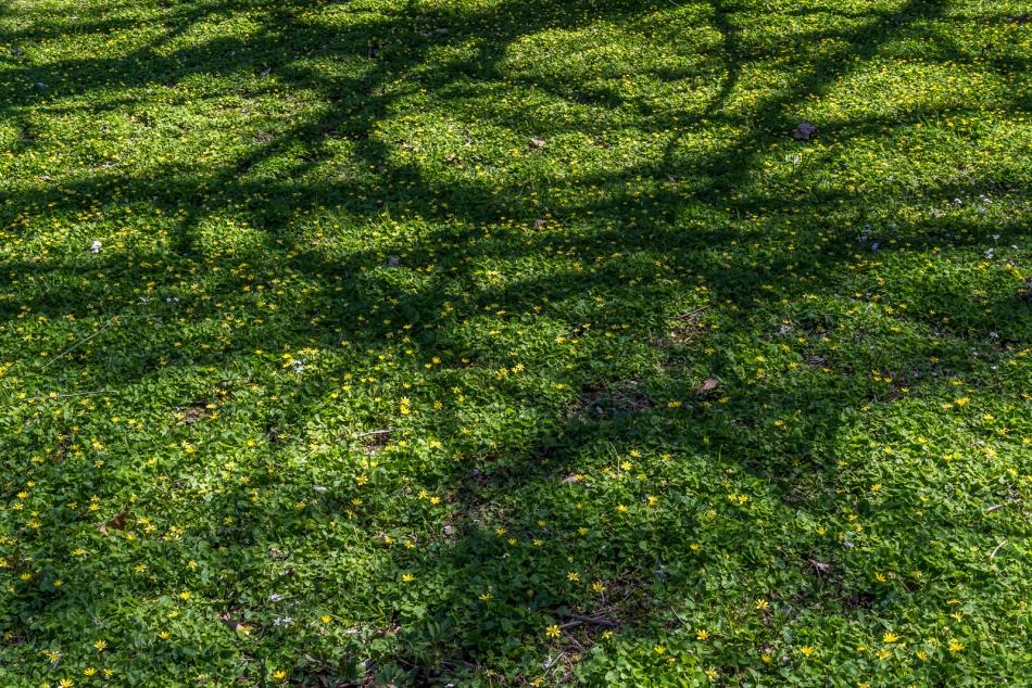 04172016 Schoepfle Garden-147