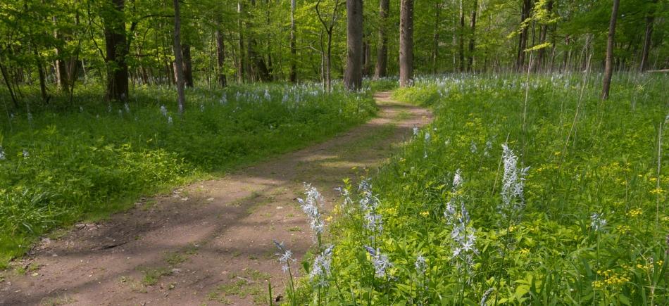 05222016 Schoepfle Garden-130