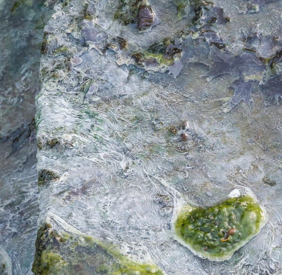 07102016 Kendal at Oberlin-20-3