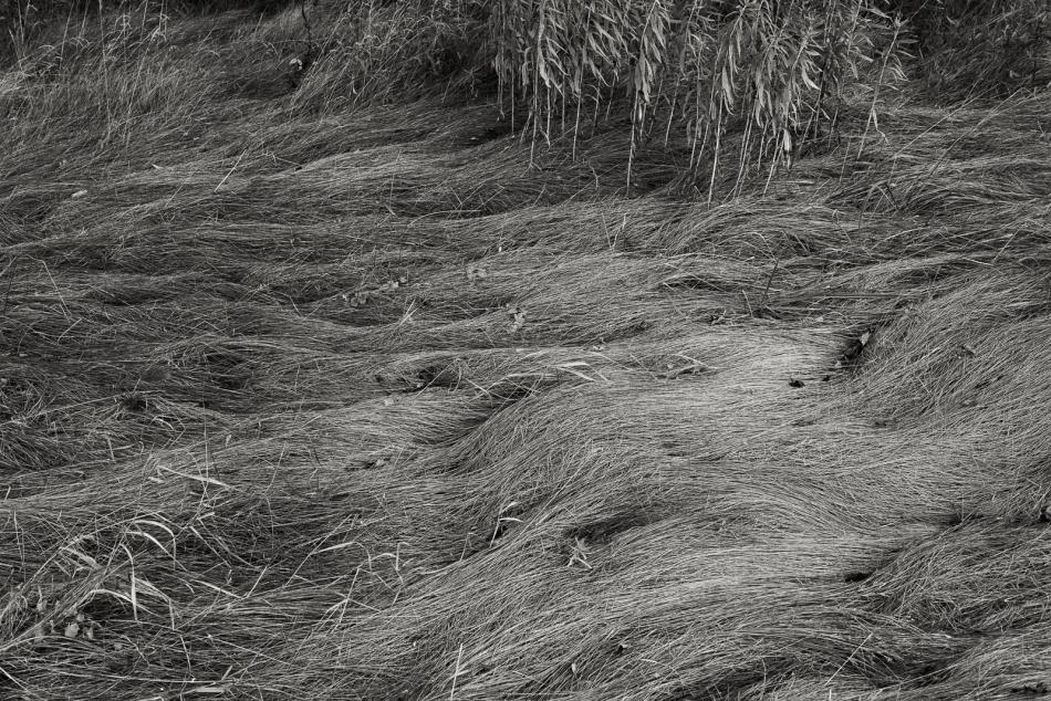 08012016 Kendal at Oberlin-23-Edit-Edit