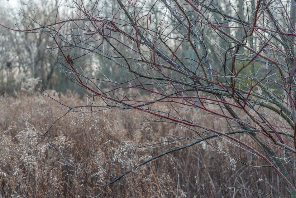 11272016-wandering-northern-ohio-40