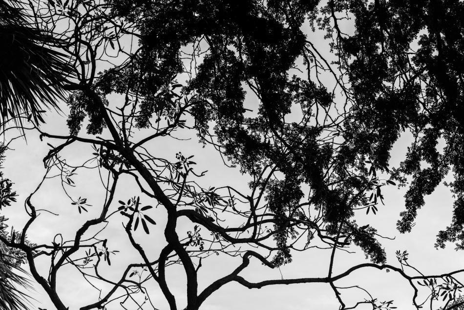 12262016-selby-gardens-71-edit